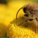 Honig-Geniesser-Angebot, 6x 500 Grammglas