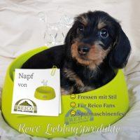 Bei Reico ist jeden Tag Welthundetag! - Aus unserem schicken Reico Napf schmeckt das Futter nochmal so gut!